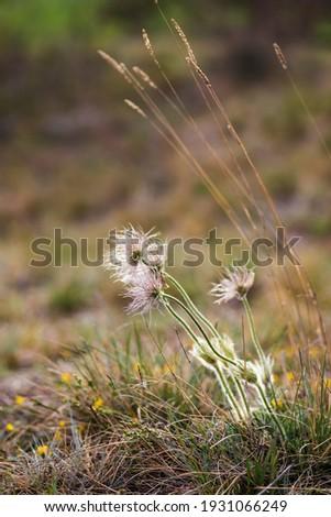 Pusty kopec u Konic near Znojmo, Southern Moravia, Czech Republic Zdjęcia stock ©