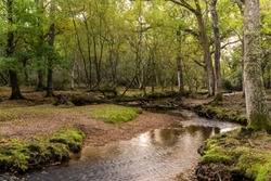Puttles bridge over Mill Lawn Brook in New Forest, England, and oak trees.