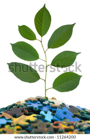 Puzzle and plant, isolated on white background