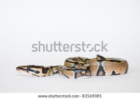 Python Hatchling