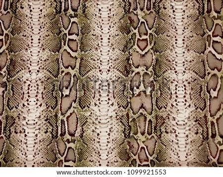 python pattern, snake skin, animal skin