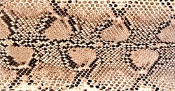 python skin reptile fashion design reptile tropical wild life animals symbol faux vegan leather