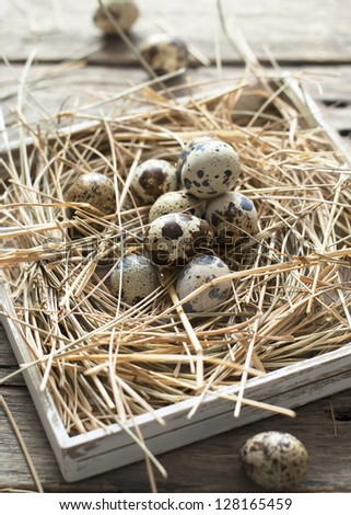 Quail Eggs Easter on a Hay