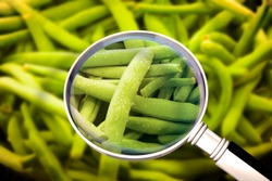 Quality control about freshness green beans - HACCP (Hazard Analyses and Critical Control Points) concept image with beans seen through a magnifying glass