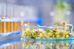 Quality control of bean sprouts for signs of bacterial or chemical contamination