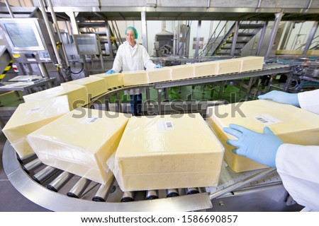 Quality control workers handling large blocks of cheese at production line in processing plant