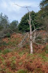 Quantock Hills AONB woods and trees