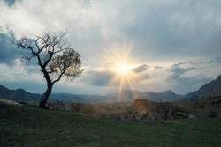 Quiet and peaceful panoramic view of beautiful big green tree at sunset growing alone in spring field on a cliff.