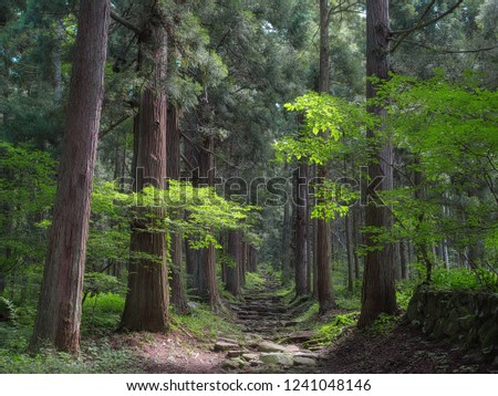 Quiet and peacefull pathway in the mountain forest of Iiyama in Nagano, Japan #1241048146