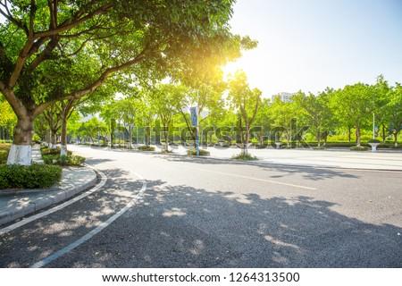 Quiet and unobtrusive college campus, the trees at the corner of the asphalt road block the summer sun