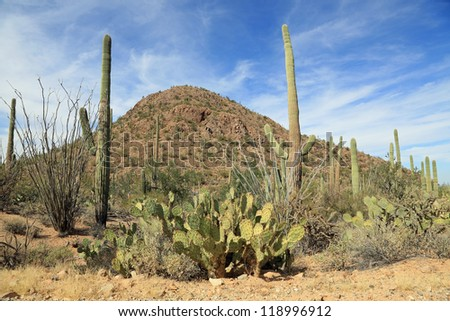 Quiet and very wild Sonoran desert with cactus in the Saguaro National Park
