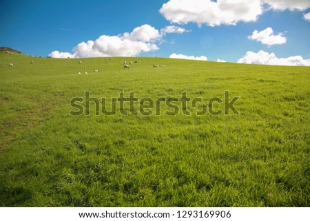 Quiet grassland natural scenery in England, England #1293169906