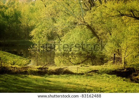 Quiet pond with large trees