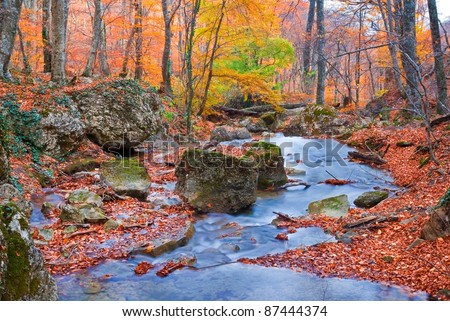 quiet river in a autumn beech forest