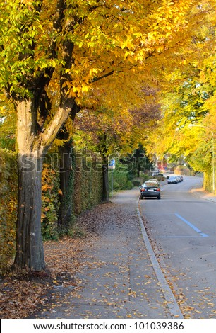 Quiet road in a neighborhood during the autumn season.