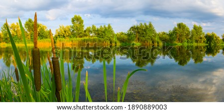 quiet summer river with cattail, summer countryside scene Foto stock ©