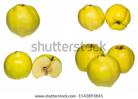 Quince Cydonia oblonga. Quince on the white background. Quince closeup. #1543893845