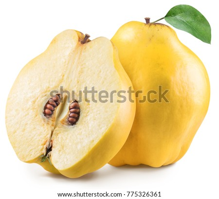 Quince with quince leaf. File contains clipping path. #775326361