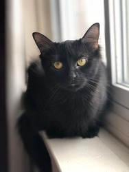 Quinn my black kitty modelling she has beautiful silky fur and she is a very kind sweet kitty