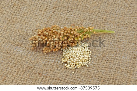 Quinoa plant and grain