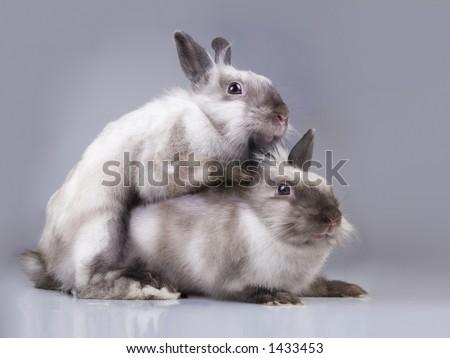 rabbit and love