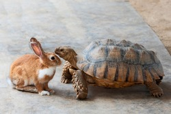 Rabbit and turtle are discussing the competition. (the rabbit and turtle tales)