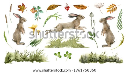 Rabbit animal natural set. Watercolor illustration. Cute bunny stand and jump on white background. Rabbit, grass, leaf, mushroom collection. Natural hand drawn element set. Fluffy bunny side view