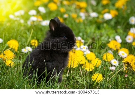 Rabbit baby bunny in green grass and dandelion meadow
