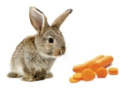 Rabbit bunny baby and orange carrot slices