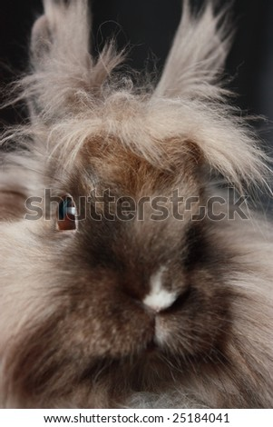 Rabbit close up