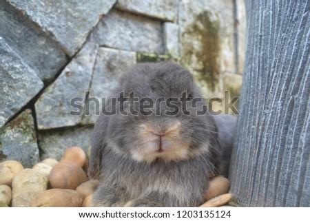 Rabbit Cute cute #1203135124