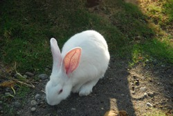 rabbit foraging in the home