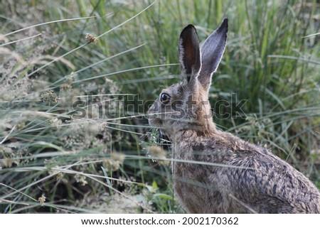 Rabbit hase tier animal wald Stock foto ©