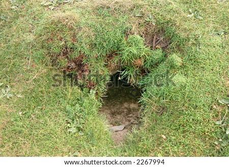 Rabbit hole, Cornwall, Uk