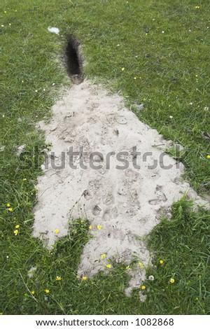 rabbit hole in a sand dune, isle of Islay, Scotland