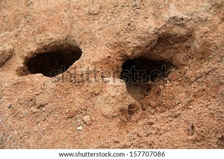 Rabbit holes, a burrow for habitation