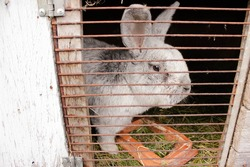 Rabbit in a cage - a gray rabbit behind bars