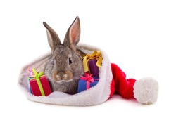 Rabbit in a Christmas hat with gifts isolated on a white background.