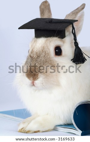 Rabbit in graduation cap