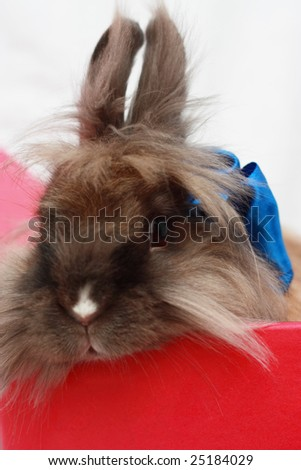 Rabbit in red box with blue ribbon