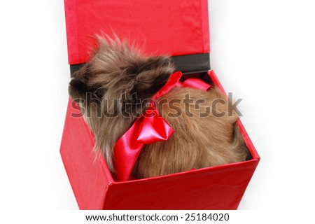 Rabbit in red box with red ribbon
