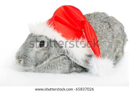 Rabbit in red cap of Santy over white
