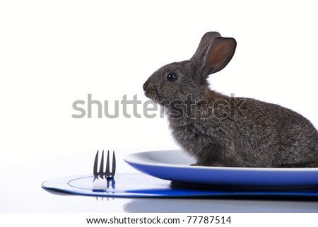 Rabbit inside a plate (isolated on white)