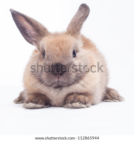 Rabbit isolated on a white background - stock photo