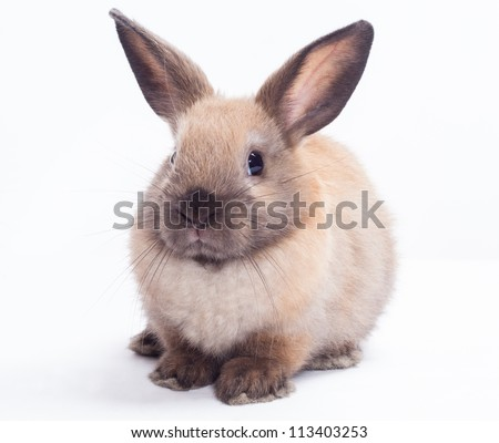 Rabbit isolated on a white background