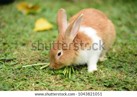 Rabbit on fresh green grass. little gray rabbit on green grass background. Flowers are blooming In the breeding season Has a green foliage background.