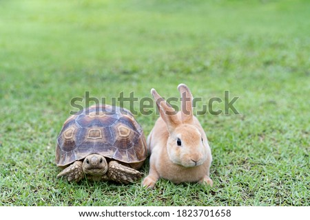 Rabbit on the turtle after completing the race at the garden in the morning. Stock photo ©