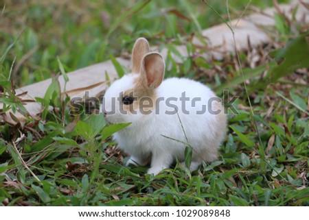 rabbit      pet     green