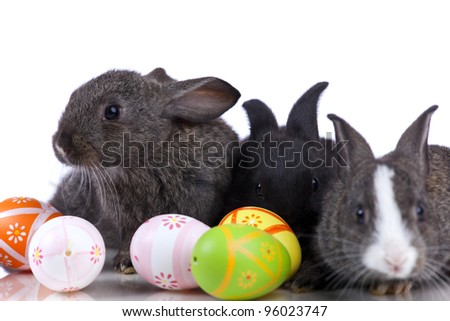 Rabbit playing with a easter egg  (isolated on white)