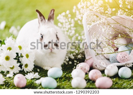 Rabbit sitting next to Easter decorations. Easter, traditional Christian holiday. Symbol of spring.